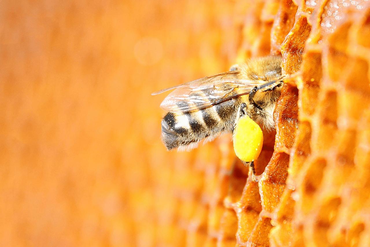 trasporto del polline